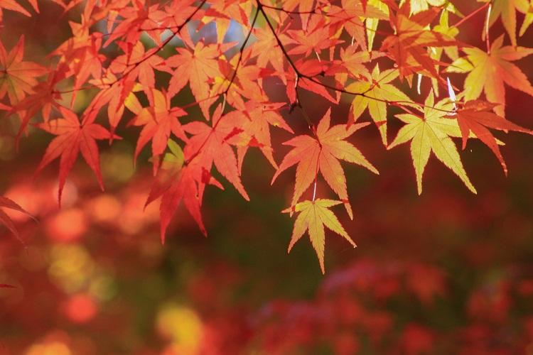 秋の抜け毛はいつまで続くのか知りたい!予防法や対策は?